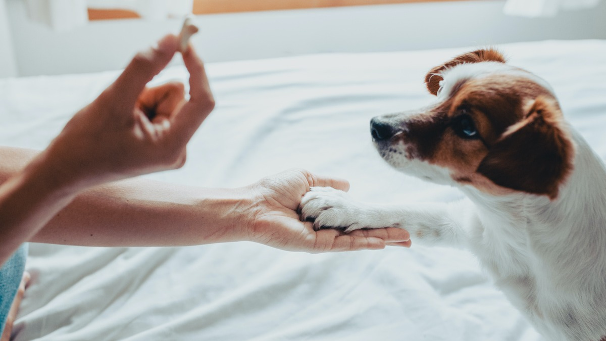 5 Ways Your Dog Communicates With You